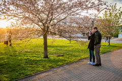 Couple taking pictures of Sakura blooming, Vilnius. Capital of Lithuania, Baltic state in Europe royalty free stock photos