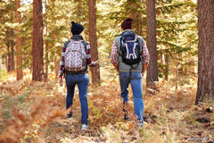 Couple talking on hike in forest, back view, California, USA Stock Photography