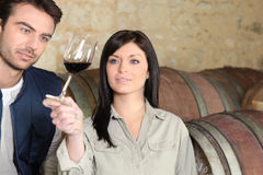 Couple tasting wine. Couple in a cellar tasting wine Royalty Free Stock Photo