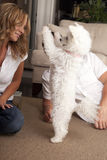 Couple teaching dog trick. Couple at home teaching dog trick, to stand on hind legs Stock Photography