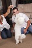 Couple teaching dog tricks Stock Photo