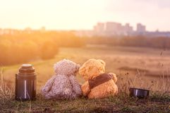 Couple of teddy bears sits back on fallen autumn leaves on top of a hill and looking at the city on sunlight stock photos