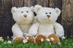 Couple of teddy bears sitting in the green embraced. Funny decor Royalty Free Stock Photos