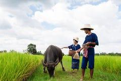 Couple Thai Farmer with buffalo Stock Images