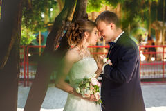 Couple touching each other near carousel. Wedding couple touching each other near tree and carousel Royalty Free Stock Image