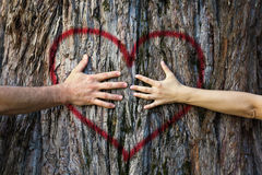 Couple touching heart. Hands of couple in love hugging a tree with painted red heart Royalty Free Stock Photos