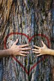 Couple touching heart. Hands of couple in love hugging a tree with painted red heart Stock Photo