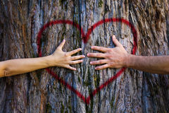 Couple touching heart. Hands of couple in love hugging a tree with painted red heart. Marriage, relationship, love concept Royalty Free Stock Images