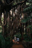 Couple of tourists in The Jungle Ara in Loro Parque stock photography