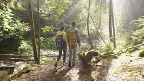 A couple of tourists are walking along a mysterious forest early in the morning. The rays of the sun shine through the. Branches of trees stock footage
