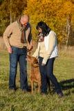 Couple training dog in sunny autumn park Royalty Free Stock Image