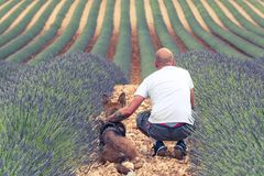 Couple travellers in lavender fields in Provence.  Royalty Free Stock Photo