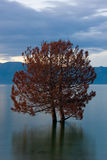 Couple of trees standing in the lake. Sunset over couple of trees standing in Lake of Sevan Royalty Free Stock Images
