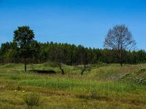Couple trees. Standing on the lawn Royalty Free Stock Photography
