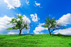 A couple of trees under cloudy sky. A couple of green trees growing on the green hill under cloudy blue sky Stock Image