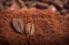 A couple of two coffee beans. Closeup of a pair of coffee beans on the ground arabic coffee pile royalty free stock image