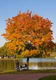 A couple under the autumn tree Stock Image