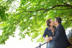 Couple under a chestnut tree. Couple kissing under a chestnut tree stock photo