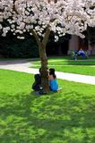 Couple under a tree. A young couple sitting under a japanese cherry flower tree Stock Images
