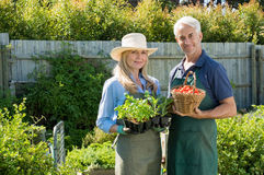 Couple in vegetable garden Royalty Free Stock Image