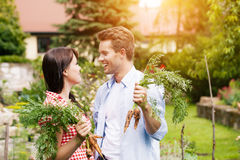 Couple in vegetable garden harvesting Royalty Free Stock Photos