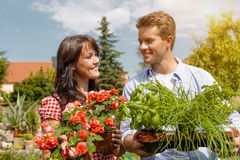 Couple in vegetable garden harvesting Stock Image