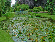 Couple Viewing a Lily Pond Stock Images
