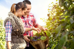 Couple in vineyard with a wicker basket Stock Photos