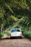 Couple in a vintage car. Just married couple in a vintage car driving down a treed boulevard stock image