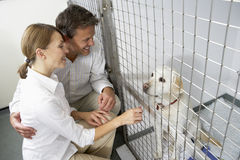 Couple Visiting Pet Dog Stock Images