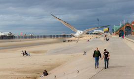 Couple walkimg on the promenade with seagull flying past Royalty Free Stock Photos