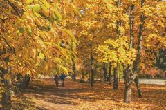 Couple walking along autumn alley in the city park.  Royalty Free Stock Images