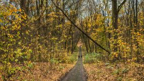 Couple walking along autumn alley in the old park.  Royalty Free Stock Images