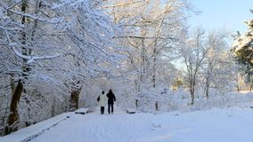 A couple walks along the snow-covered park and pour out snow from the branches stock footage