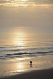 Couple walking on beach at sunrise. Royalty Free Stock Photo