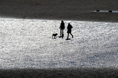 Couple walking dog on beach at low tide. Royalty Free Stock Photos