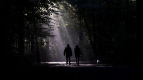 Couple walking the dog in dark forest stock video