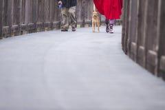 Couple walking dog on path
