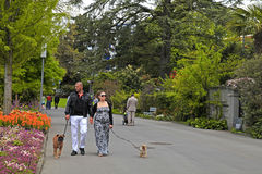 Couple walking dogs Royalty Free Stock Image
