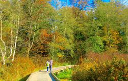Couple Walking Down the Pathway Surrounded by Beautiful Autumn Trees stock photo