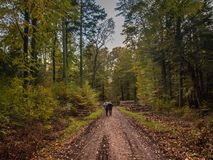Free Couple Walking German Forest In Autumn Stock Images - 109372014