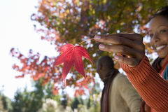 Couple walking hand in hand in autumn park, focus on woman holding red maple leaf, smiling, side view, portrait Stock Images