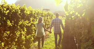 Couple walking hand in hand between grapevine