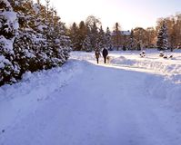 A couple walking with his dog in the park in winter royalty free stock photography