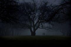Walking by an oak tree stock photos