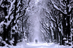 Couple walking in the park, winter time Royalty Free Stock Photos