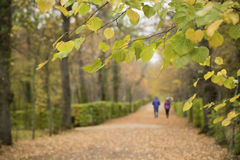 Couple walking in the rain. In the park one autumn day Stock Photos