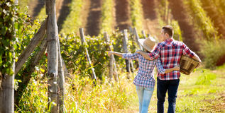 Couple walking in between rows of vines Stock Images