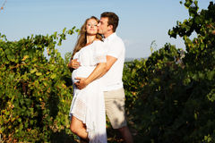 Couple walking in between rows of vines Stock Photos