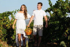 Couple walking in between rows of vines Royalty Free Stock Photo